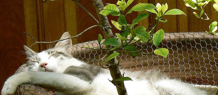 Palmuvehka Kissa